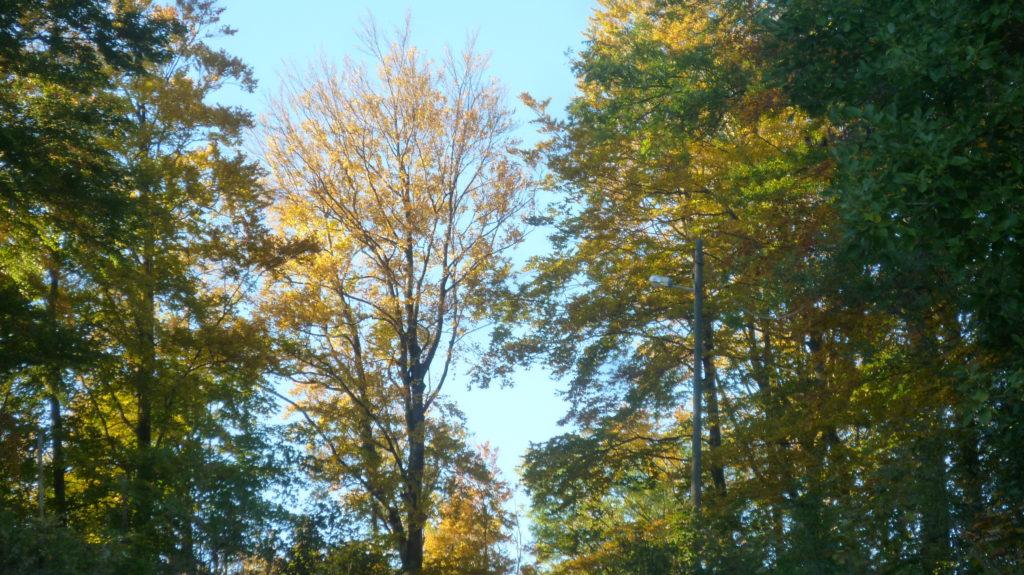 Poziv na 19. sastanak Foruma dionika Parka prirode Medvednica