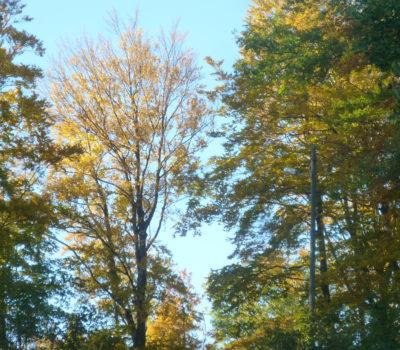 19. Sastanak Foruma dionika Parka prirode Medvednica
